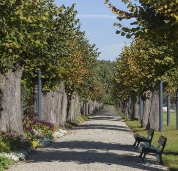 Lindenallee im Berggarten